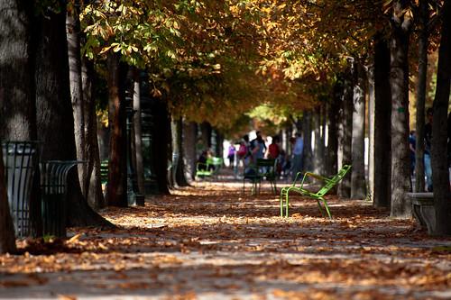 Paris - Jardin des Tuileries with Chair in Autumn