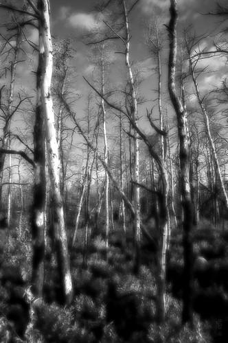 forest nikon ns halifax d90 nikon1685mmvr