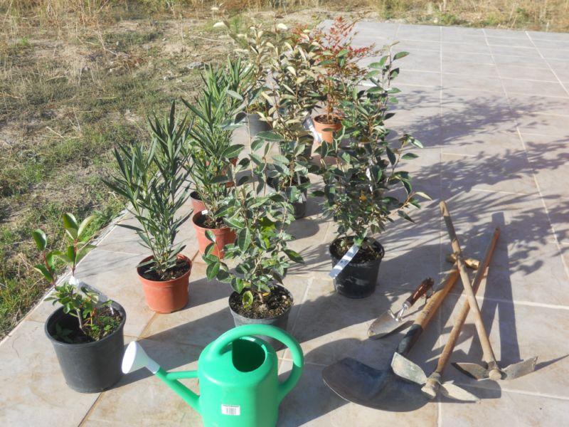 Preparativos plantación