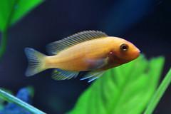 Hypnotic Fish