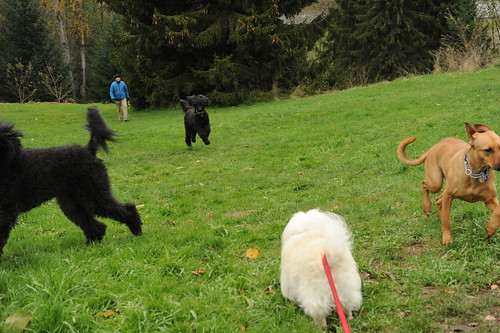 off-leash dog parks in brooklyn