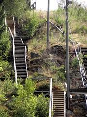 suspension bridge(0.0), rolling stock(0.0), track(0.0), bridge(0.0), canopy walkway(1.0),