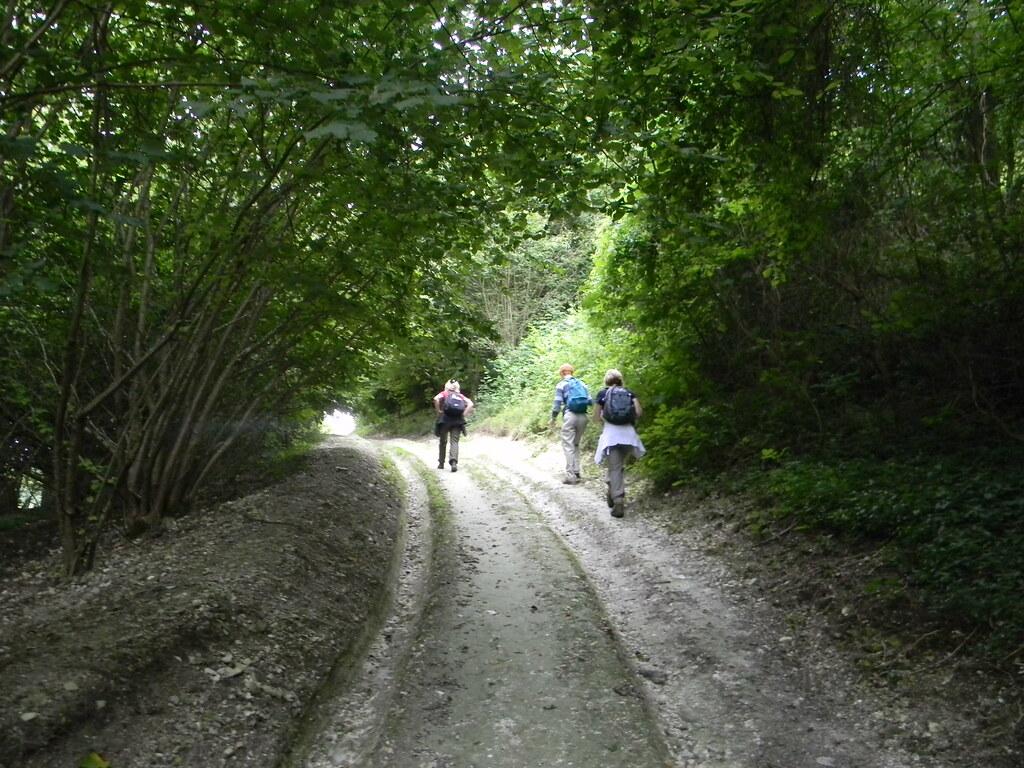Ascent - Arundel Park Amberley Circular (inc Arundel)