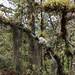 Bromelia & Spanish Moss por frankenschulz