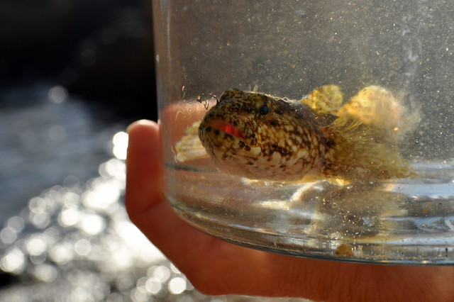 Fish in jar flickr photo sharing for Fish in a jar