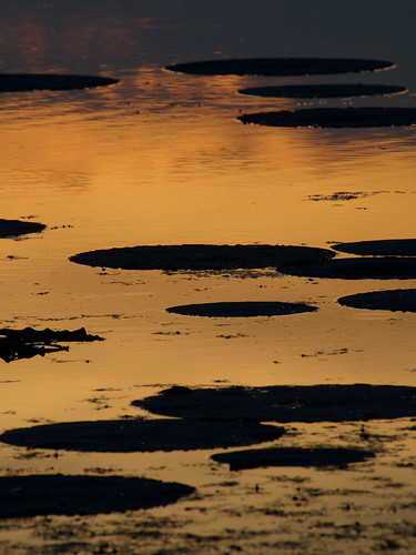 sunsets brazosbendstatepark