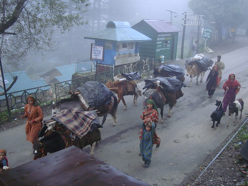 Gujjar household on its semi-annual trek in the Himalayan foothills of northern India