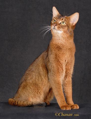 Scar-CatShowOnline