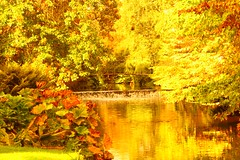 Autumn at Mount Usher Gardens, County Wicklow, Ireland