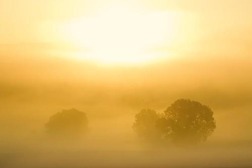 morning autumn trees sky sun mist fog sunrise landscape deutschland nebel herbst himmel landschaft sonne bäume sonnenaufgang morgen niedersachsen bühren dankelshausen geo:lat=5147956200 geo:lon=969423800