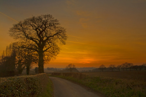 The Oak and the evening = 100 favs, thanks to you all!