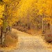 Autumn Path, Eastern Sierra