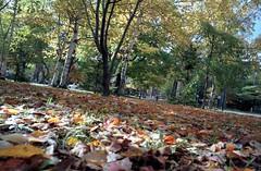 落ち葉の上でごろごろしたい by Noël Café