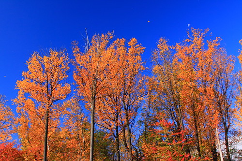 autumn trees usa moon color tree fall nature leaves america us leaf md maryland bluesky foliage northamerica clarksburg ef28135mmf3556isusm canoneos50d markaveritt