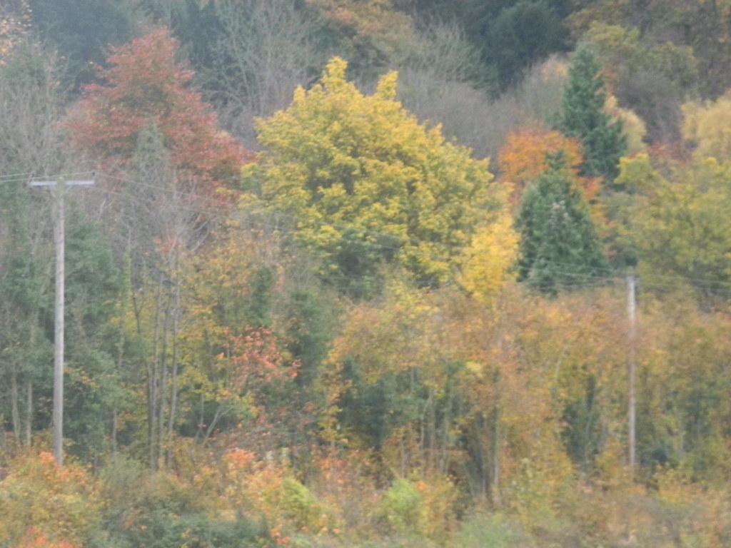 Autumn tints Sole Street Circular