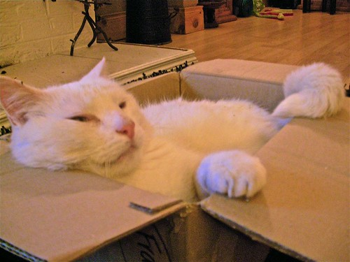 Cat in a Box 5
