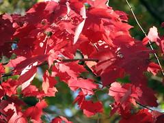 Autumn Colors Lake Crabtree NC 0445