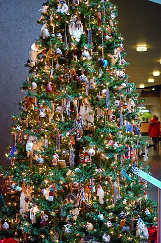 Evergreen Tree Ideas Cheistmas Decoration Au