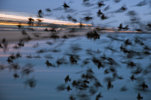 5218675956 13d7c5c111 z [Inspiration] Otherworldly Images Of The Phenomenon Known As A Murmuration