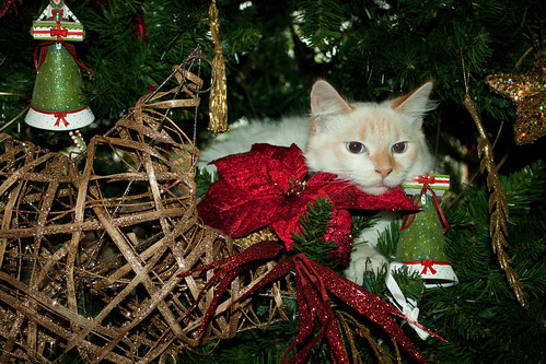 Cat in the tree!
