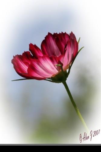 ny newyork flower photoshop canon bokeh 7d upstatenewyork capitaldistrict 100mmmacrof28lisusm