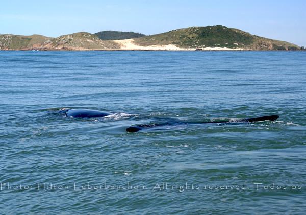 laguna brasil