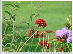 Sommerblumen - summer flowers