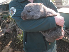 squirrel(0.0), rat(0.0), koala(0.0), animal(1.0), wombat(1.0), rodent(1.0), pet(1.0),