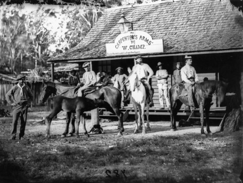 horses photographer queensland hotels foals statelibraryofqueensland slq williamboag