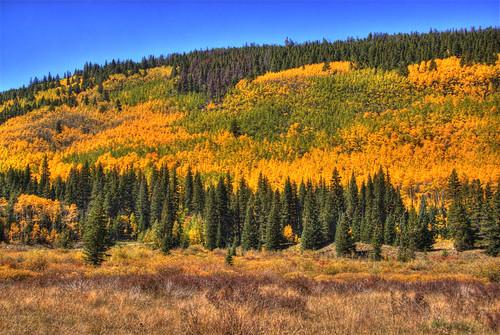blue autumn sky mountain tree fall gold colorado foliage aspen breckenridge 201009
