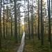 Small photo of Wood Path through Lahemaa peat bog