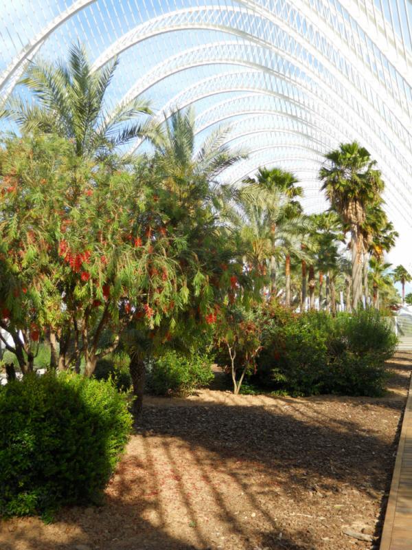 Callistemón y palmeras