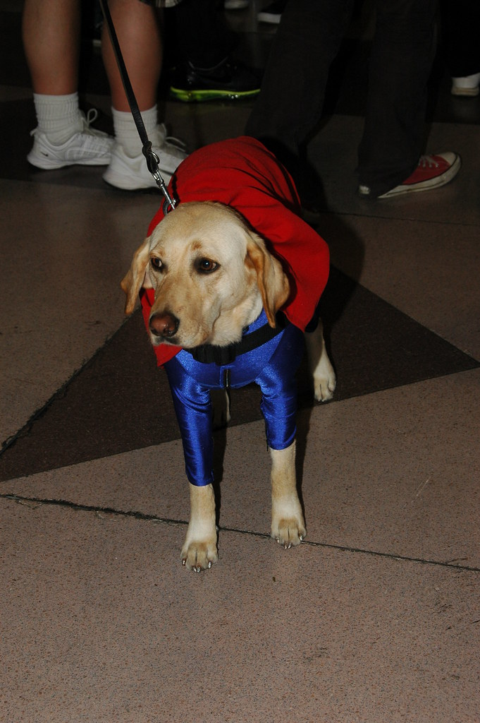 Large Dog Superman Costume