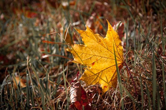 Header of autumnally