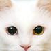 iphone_Wallpapers_milktea by kenty_