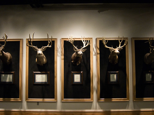 Cabela S Trophy Room