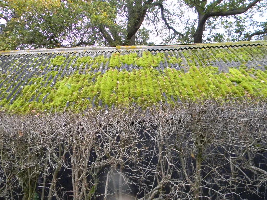 Green roof Edenbridge Town to Westerham