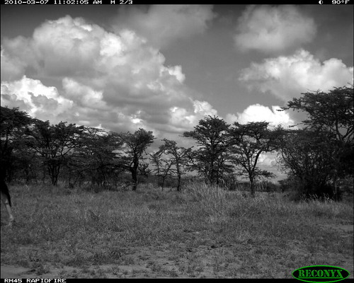 mpala oryxbeisa deerandantelope siwild:study=mpala siwild:studyId=mpalasets siwild:plot=oljogi geo:locality=kenya taxonomy:group=deerandantelope file:name=img0479jpg file:path=dpt37pt37cam62disc28bimg0479jpg siwild:location=mpala239 siwild:camDeploy=mpaladeploy688 taxonomy:species=oryxbeisa taxonomy:common=besiaoryx siwild:trigger=oljogiseq1222 siwild:date=201003071102000 sequence:index=5 besiaoryx sequence:length=5 sequence:id=oljogiseq1222 siwild:imageid=kenyapic6491 geo:lon=0357232 geo:lat=37045574 siwild:region=kenya BR:batch=sla0620101118055537 siwild:species=197 sequence:key=2