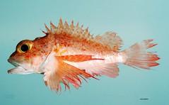 fish4437