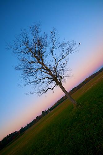 autumn winter tree fall leaves sunrise nikon bluehour thefuture d90 sigma1020mmf456exdchsm