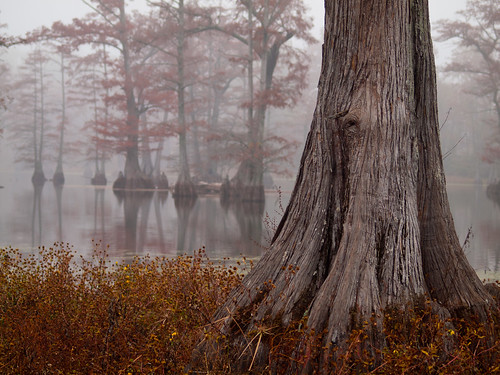 fog arkansas cypresstrees northlittlerock rosenbaumlake