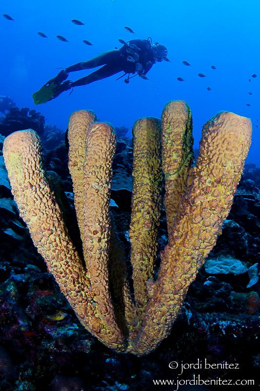 Bonaire 'Paraíso del Buceo'