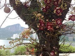 flower, branch, tree, cannonball tree, floral design, plant, flora, floristry,