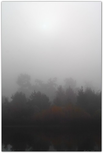 autumn trees sun fall nature fog landscape pond louisiana batonrouge shore muted mrgreenjeans gaylon canonef50mmf25compactmacro gaylonkeeling