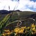 Někde kolem Mt. Brandon, foto: Petr Nejedlý