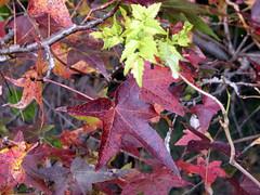 Autumn leaves Walnut Creek Lake Raleigh NC 0502