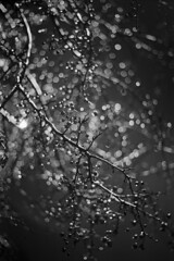 Backlit Raindrops On Parking Lot Tree Branches