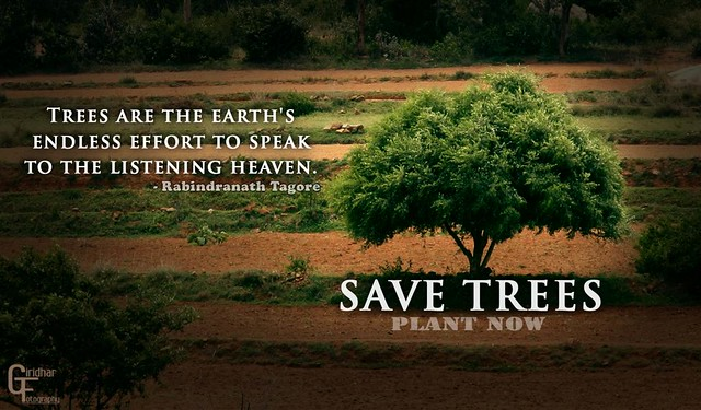 Save trees | Flickr - Photo Sharing!