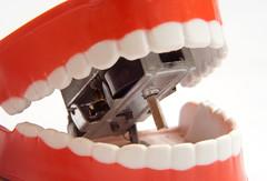 tooth, red, oral hygiene, jaw, organ,