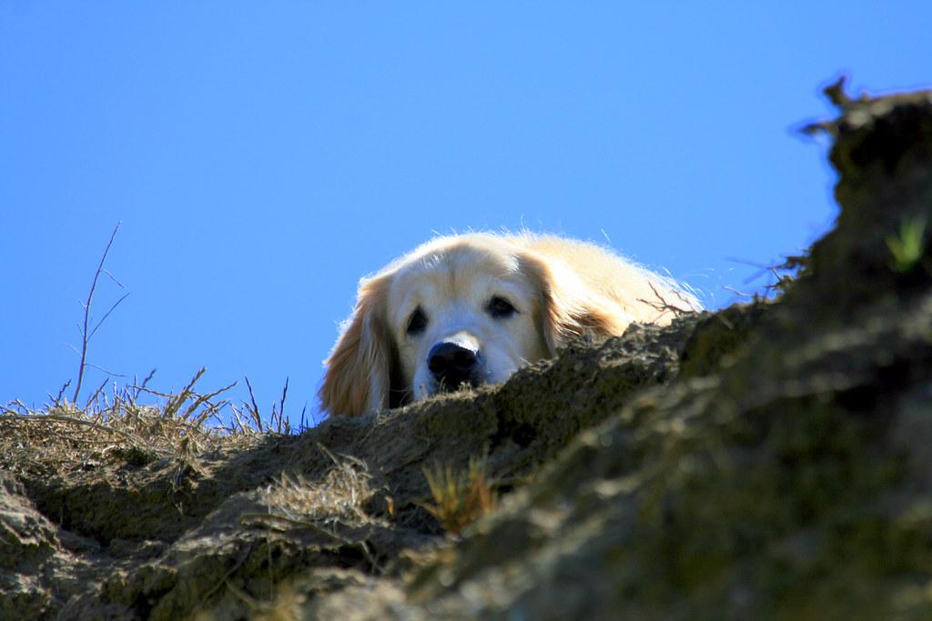 Cisco in Cambria on a cliff